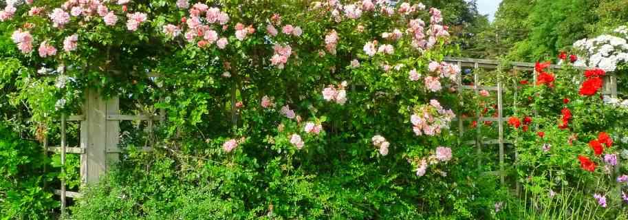 entretien jardin carcassonne